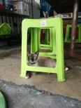 Meow from Bangkok, Thailand